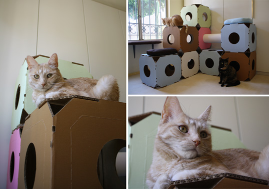 kostki-dla-kotow-2 - z karotnu